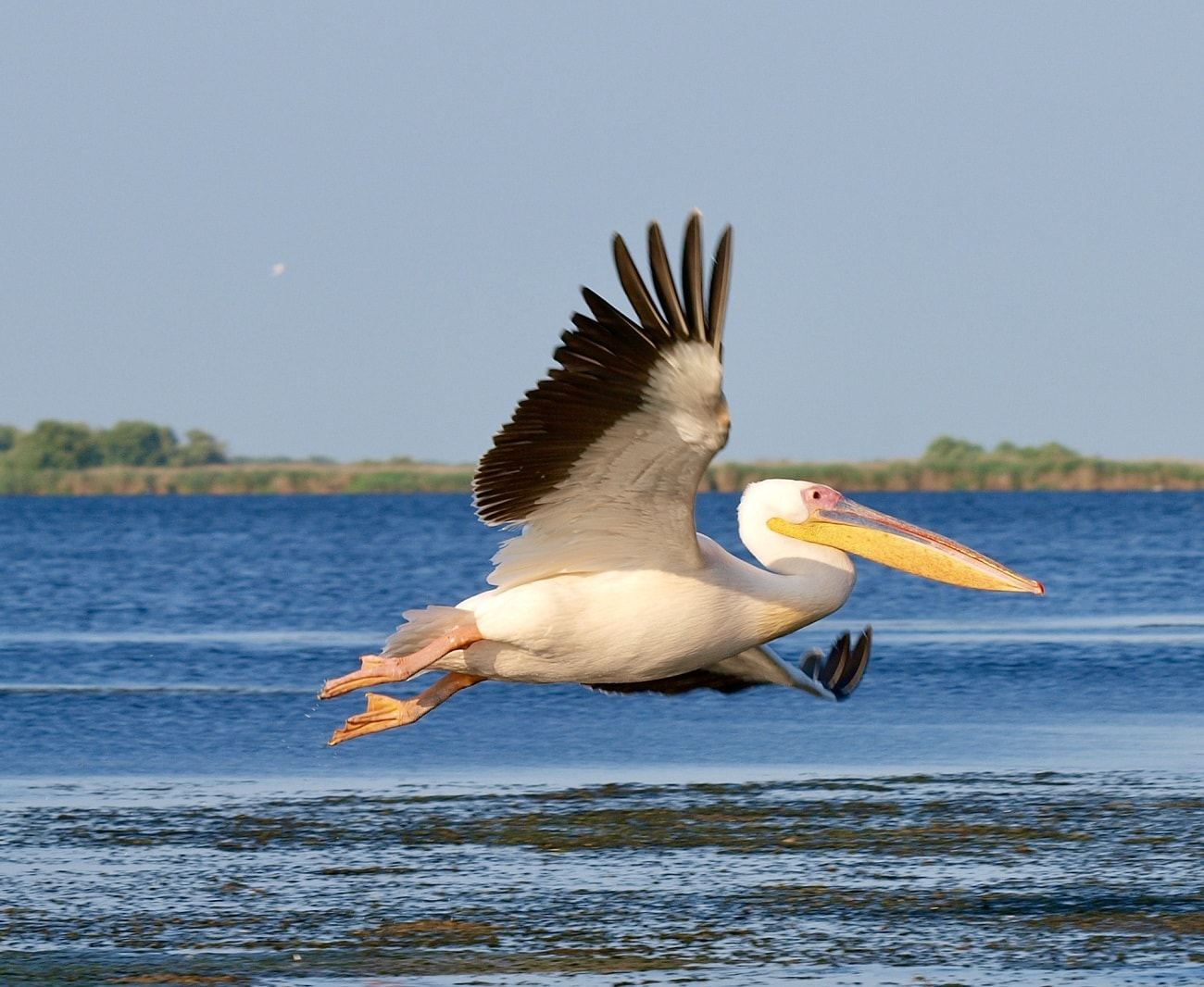Fly away in Danube Delta